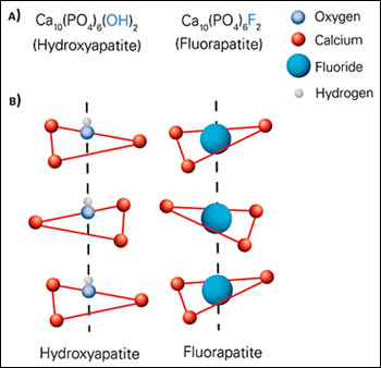 Hydroxyapatite and Fluorapatite molecules