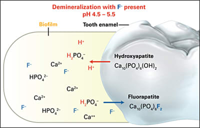 Image: Fluoride Reactivity