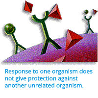 Image: Response to one organism does not give protection against another unrelatedorganism.