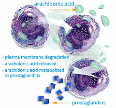 Image: Artistic drawing of prostaglandins and arachidonic acid cells.