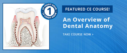 Featured CE Course - ce500 An Overview of Dental Anatomy
