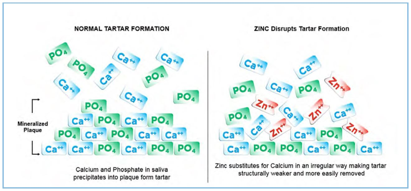 Mechanism of action of zinc
