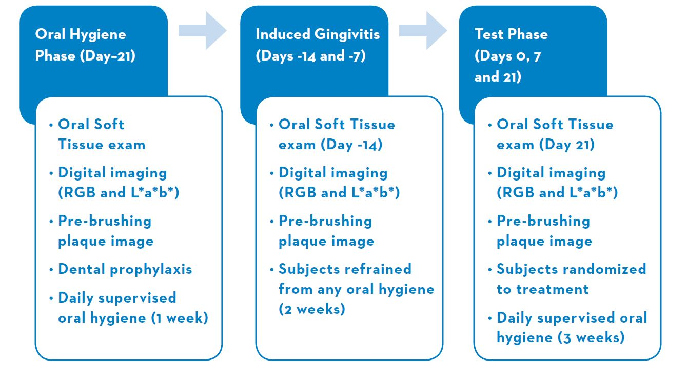 Oral Hygiene Induced Gingivitis Study Design