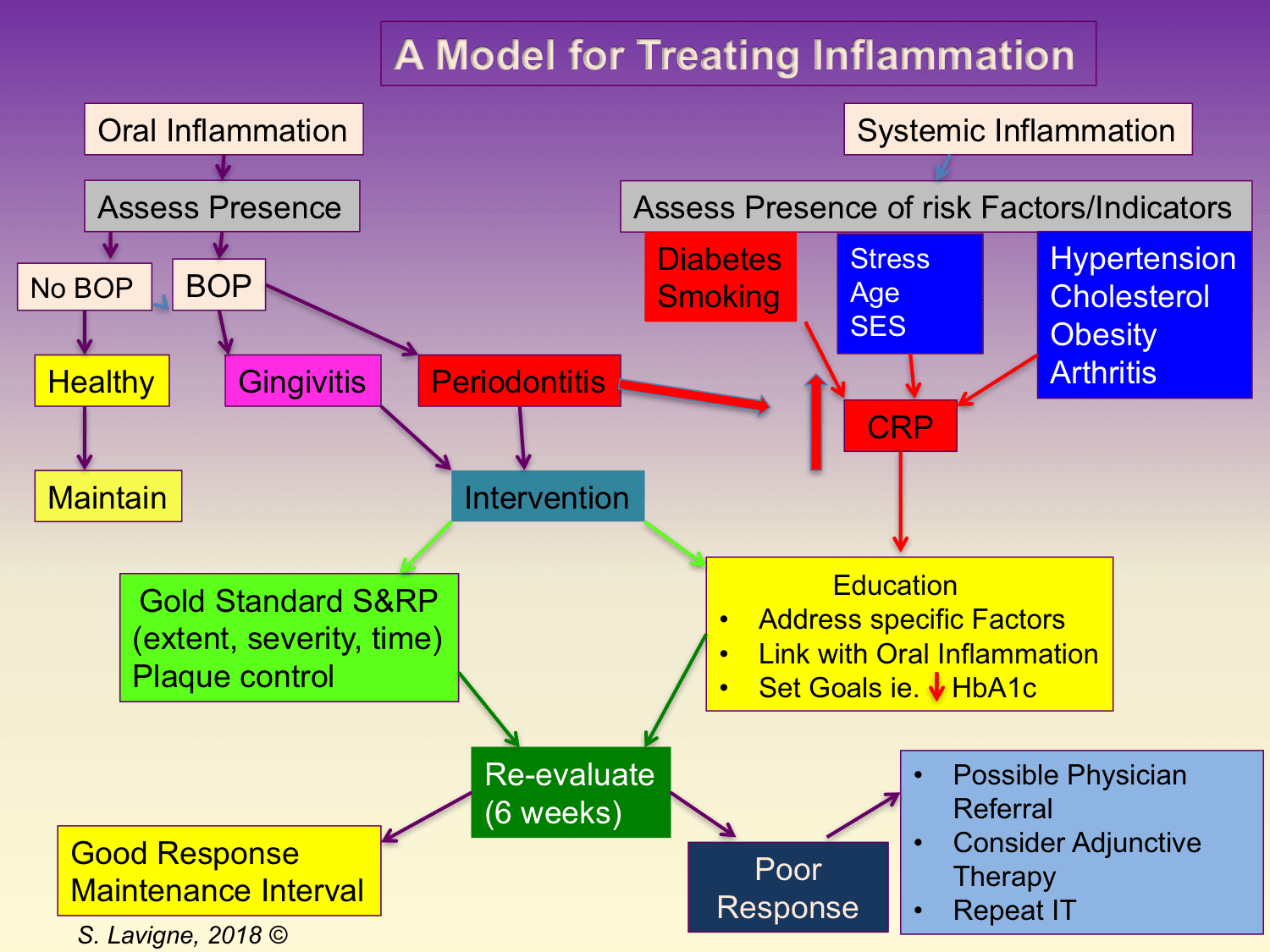Image: Model for treating inflammation.