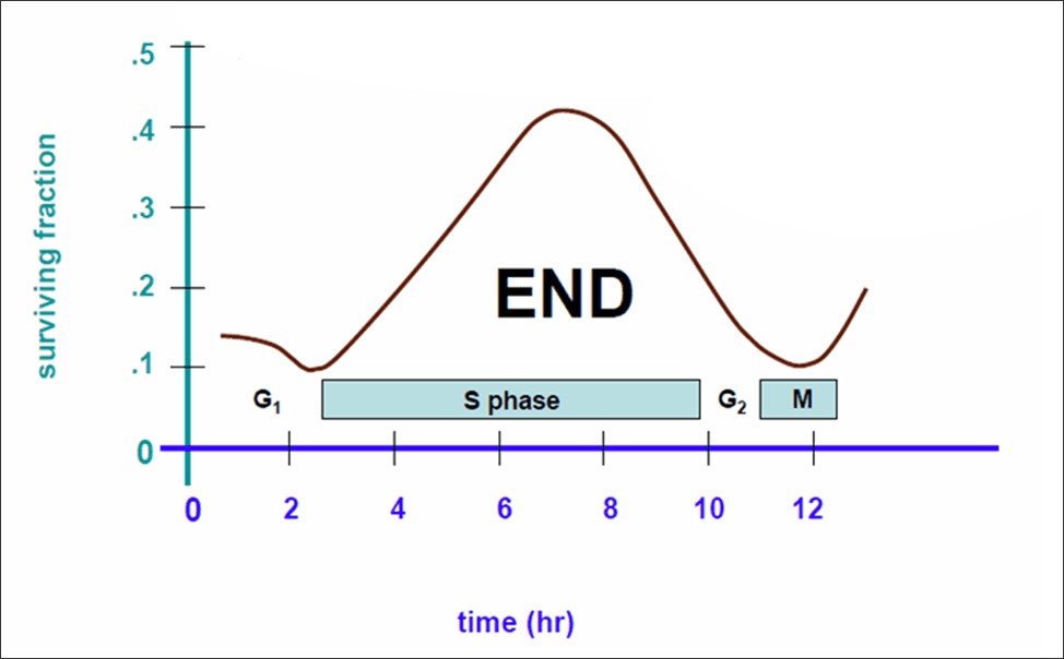Cells are most radiosensitive in the G1, G2, and M phases