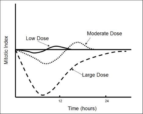 Change of mitotic rate as a function of dose and time