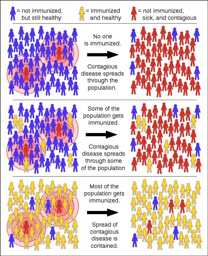 Chart showing how disease is spread through a population