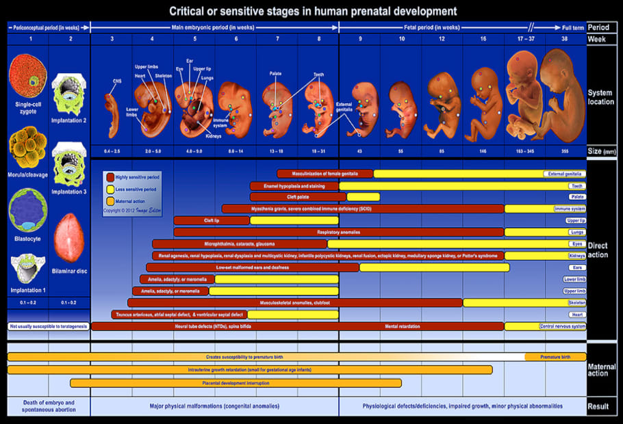 Vulnerable Periods of Fetal Development