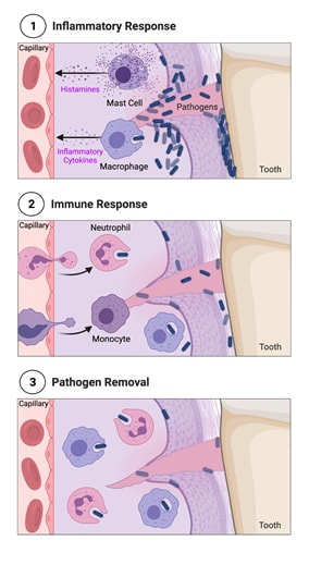 Image: Artistic drawing of cells.