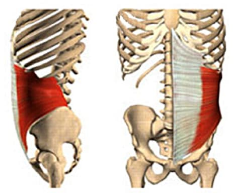 Image of internal obliques.