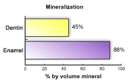 Image showing mineralization of dentin and enamel.