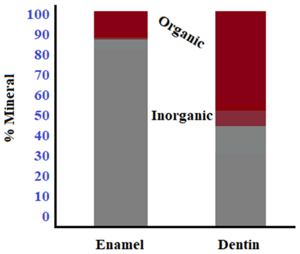 Chart showing the difference in mineral percentages between enamel and dentin