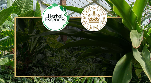 The main article page banner with a photo of Royal Botanic Gardens, and logos of Herbal Essences and Royal Botanic Gardens, Kew