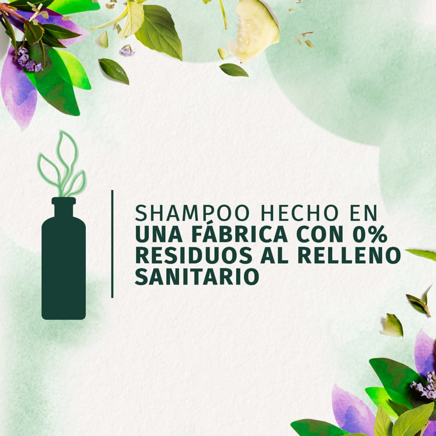 Cucumber Green Tea Shampoo