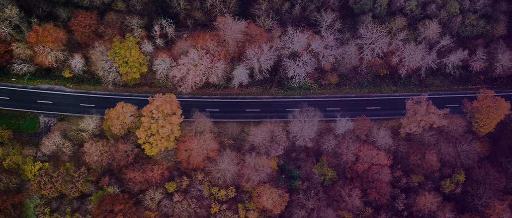 Birdseye view of autumn trees surrounding an open highway