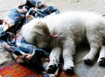 Learn how to tackle pet stains and odors in your laundry.