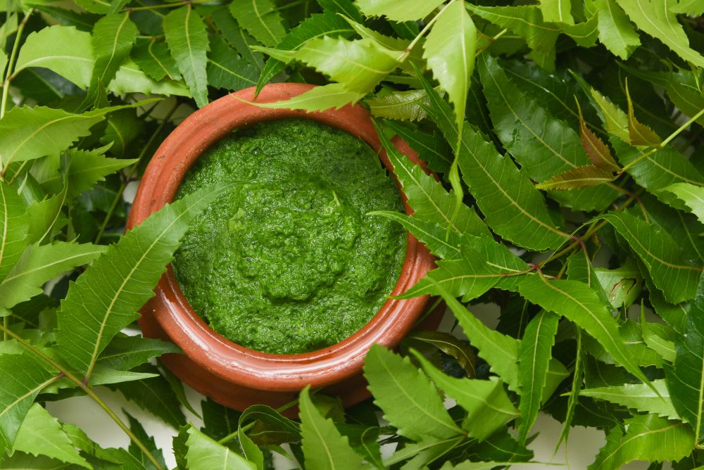 Amazing Benefits Of Neem For Hair