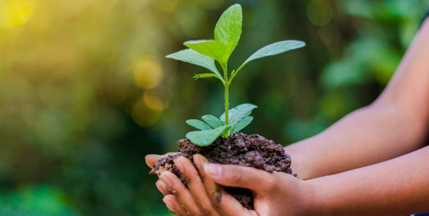 P&G Sustainability with Arbor Day Foundation