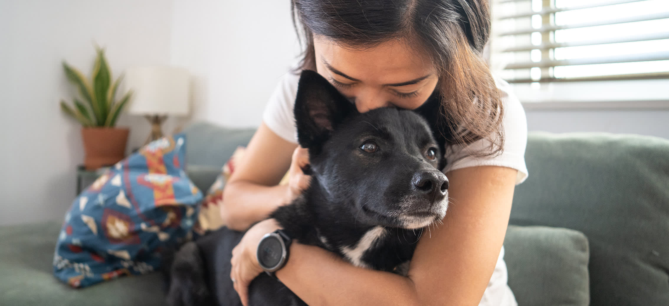 Removing Pet Hair Quickly