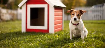 Cleaning Tips for Pet Urine Removal