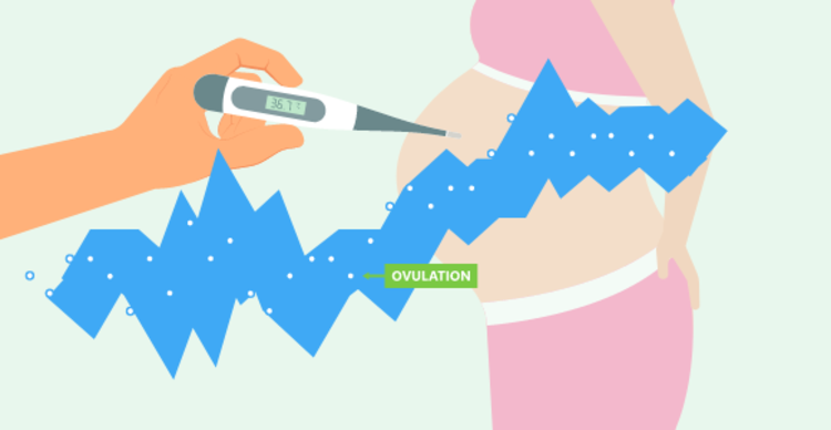 Wish to Conceive? Track Ovulation