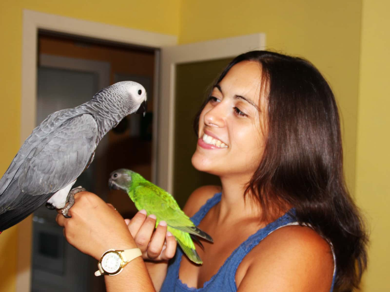 Puri and parrots