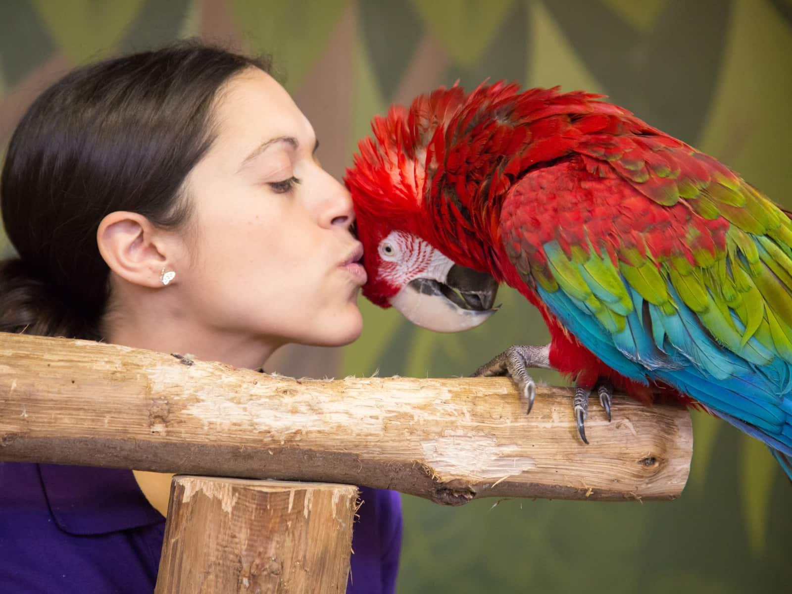 Puri and macaw