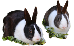 Thistle and Bracken the Rabbits with a transparent background