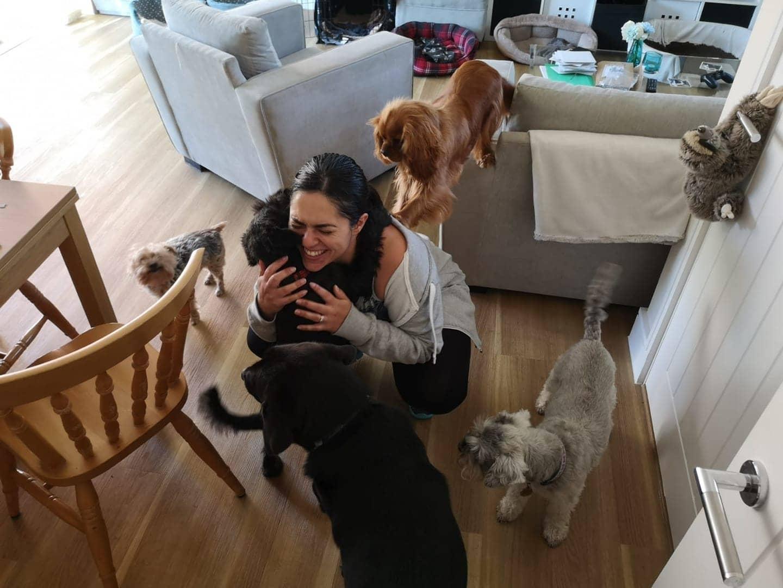 Dog greeting