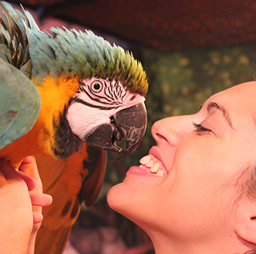 Puri with parrot