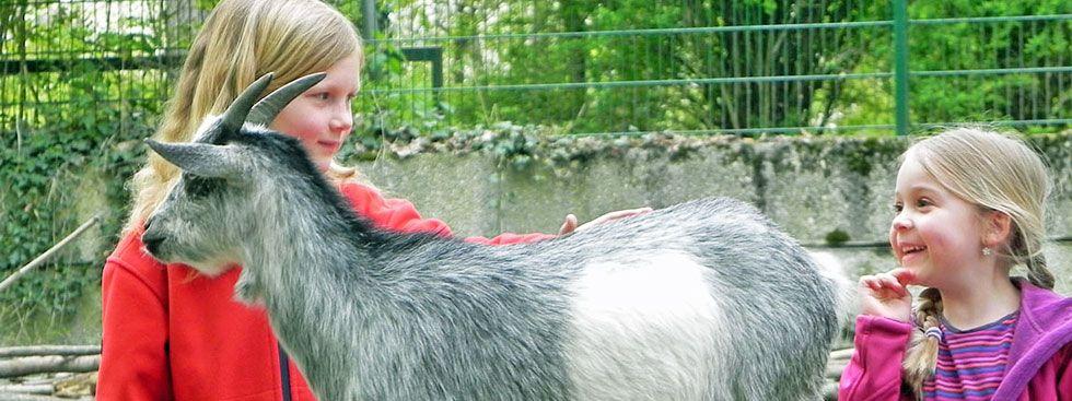 Kinder streicheln Ziege im Tierpark Hellabrunn