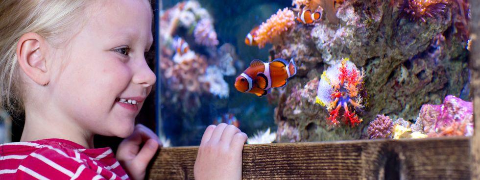 Kind staunt im Sea Life