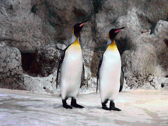 Pinguine im Tierpark Hellabrunn München