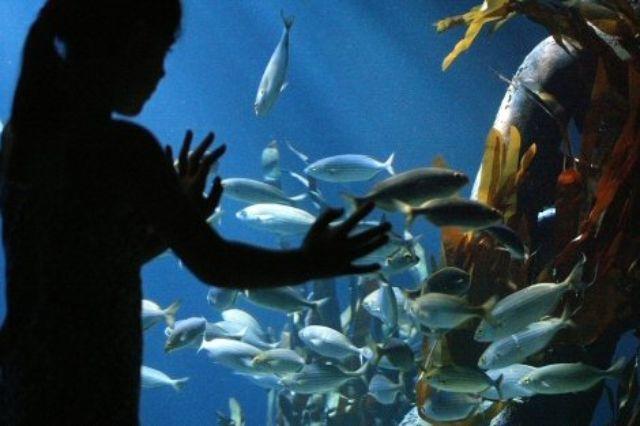 Unterwasserwelt im Olympiapark