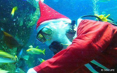 Weihnachten in Sea Life
