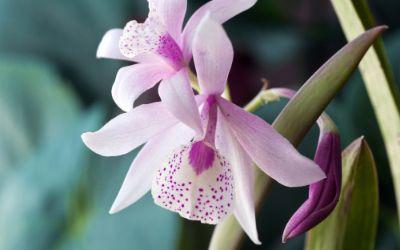 Nachaufnahme einer Orchidee