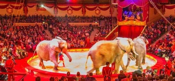 Manege im Circus Krone