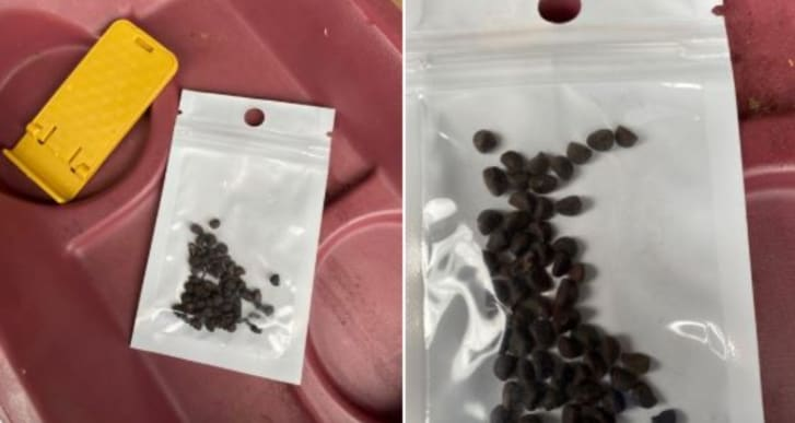 misteriosas semillas