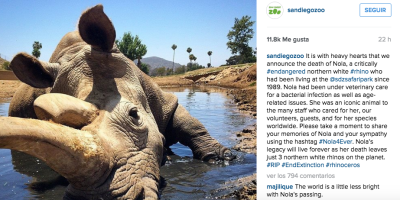 En sus redes sociales, el zoológico anunció la muerte del rinoceronte. (Instagram).