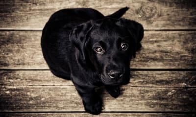 Cachorro en el Día del Cachorro (National Puppy Day)