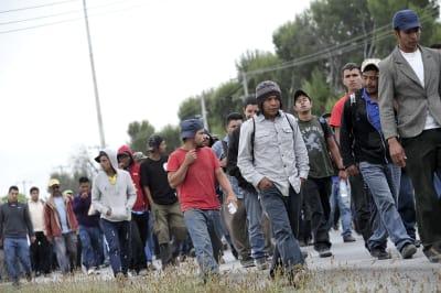 migrantes, centroamericanos, México, Estados Unidos, Donald Trump, caravana, Gina Garibo, Pueblos sin Fronteras, Puebla, TLCAN