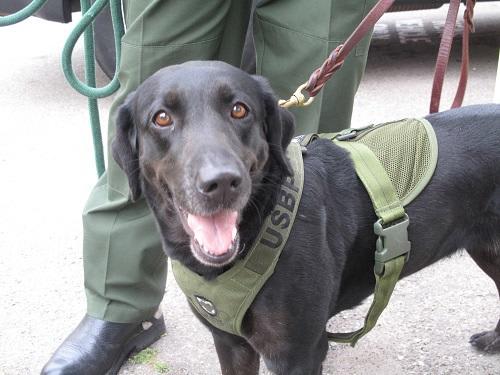 Perro policial delata a narco que traía drogas oculta