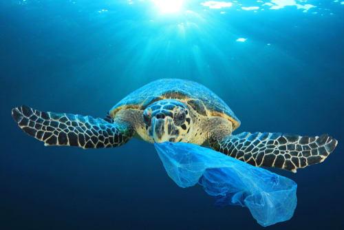 Día Mundial de las Tortugas: ¿Cómo podemos cuidarlas?