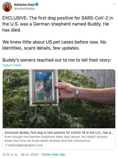 Muere perro por coronavirus, el primero en dar positivo en EEUU