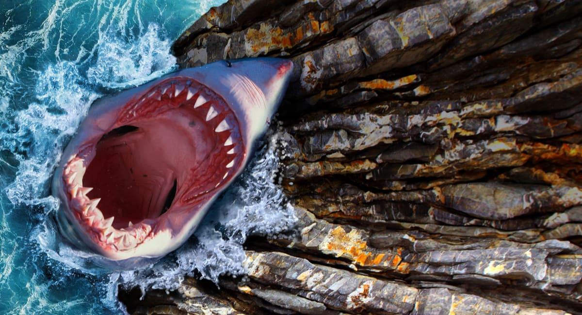 alerta tiburón