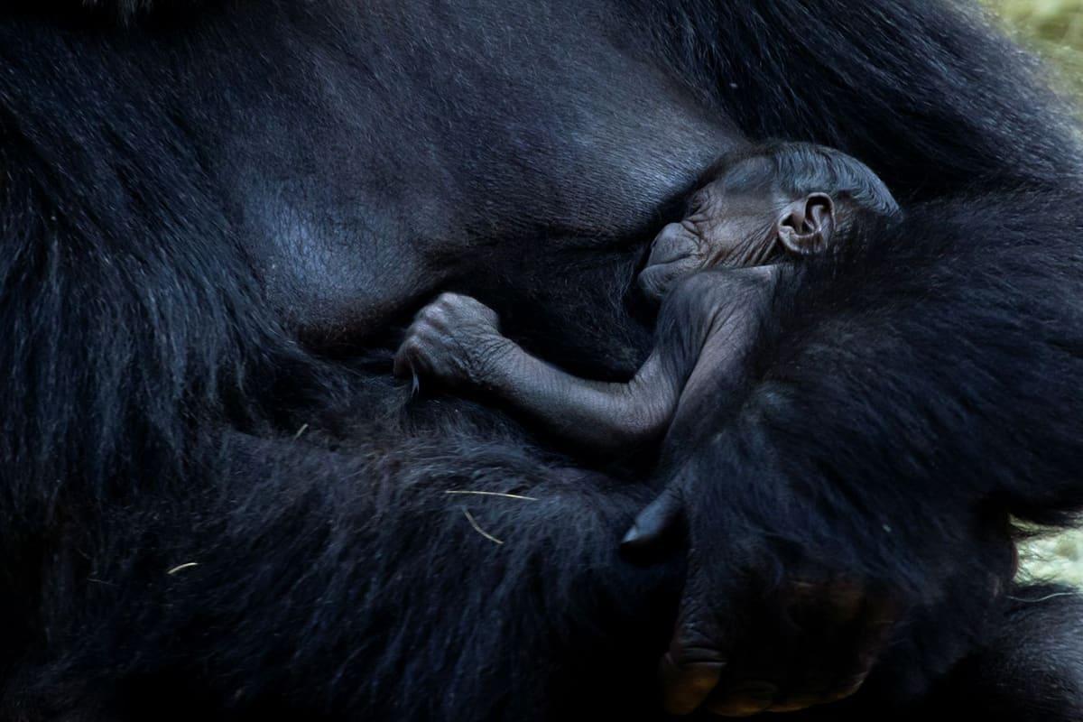 El Zoológico de Atlanta eleva su categoría con su nueva atracción The African Savanna