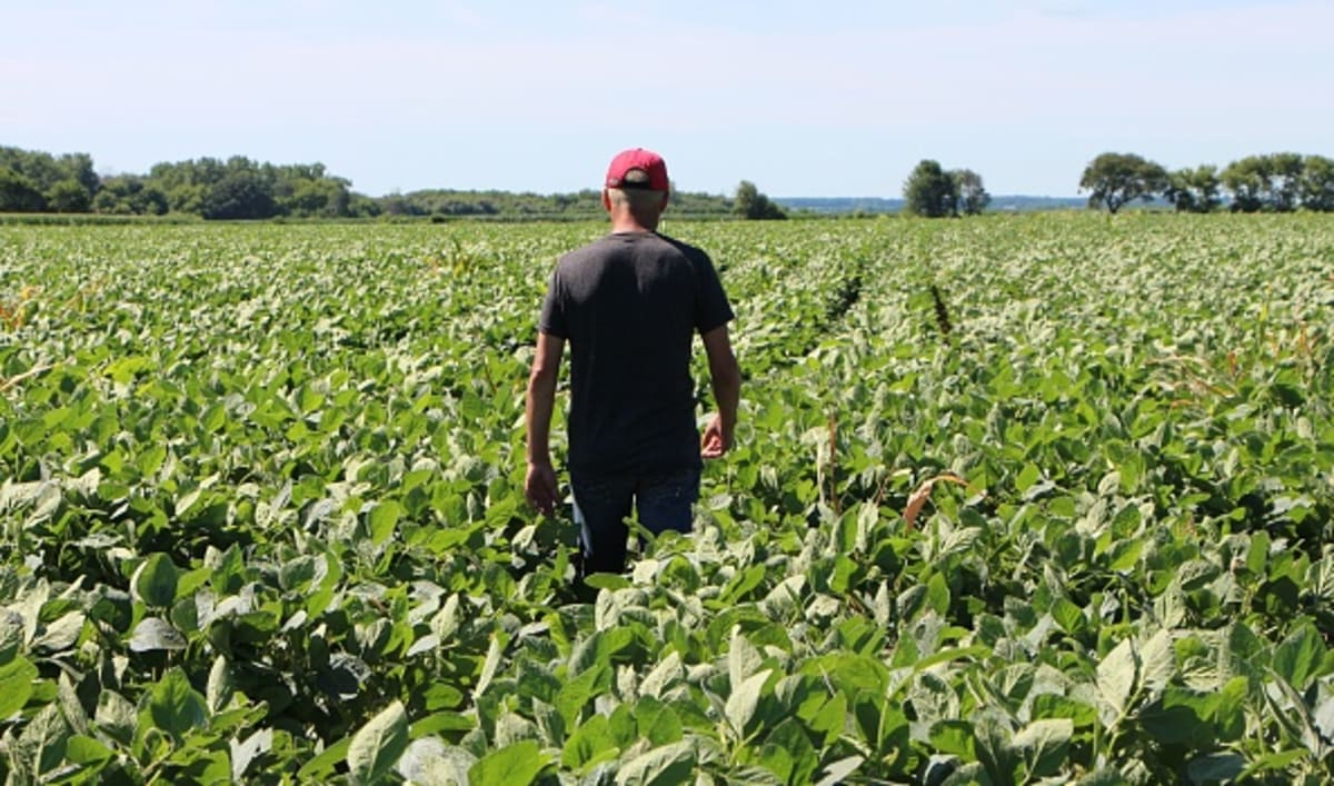 Pasa al Senado ley que beneficiaría a trabajadores agrícolas indocumentados