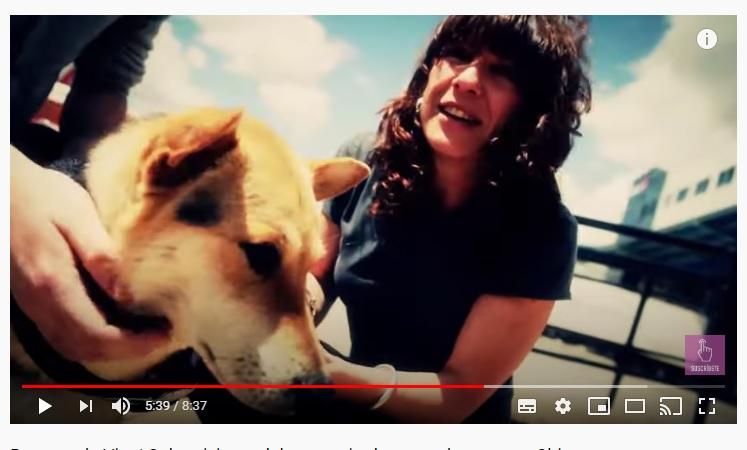 Antes de la inauguración del festival de carne de perros en China, un perro se salva de ser cocinado