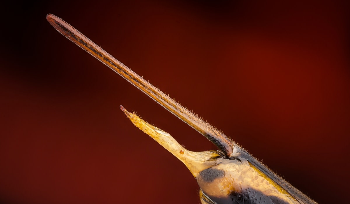 Curioso: Insecto gigante cae