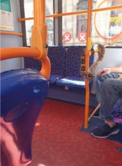 Curious: Lethal mask causes panic in bus (VIDEO and PHOTOS)